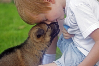 Preserving the true German Shepherd Dog for future generations